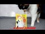 Как коты кушают Лару?